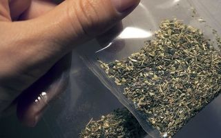 Наркозависимые граждане