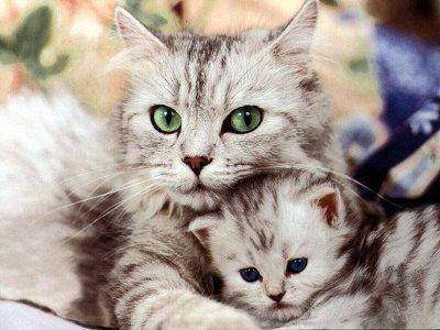 Каковы особенности содержания животных в квартире?