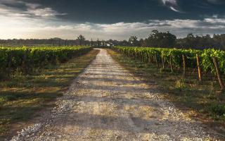Какие льготы предусмотрены по земельному налогу?
