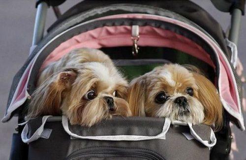 Что нужно учесть при вывозе домашних животных за рубеж?
